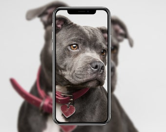 Digital Download - Staffordshire Bull Terrier iPhone Android Mobile Cell Phone or Desktop Wallpaper Background - Original