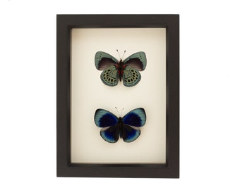 Butterfly Shadowbox Charles Darwin Front and Back
