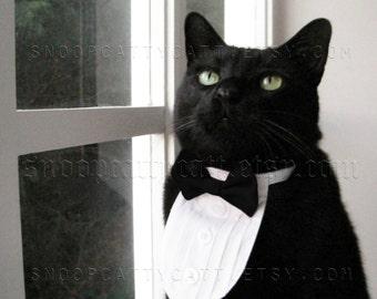 Cat Tuxedo - The Original - Classic Black Tie