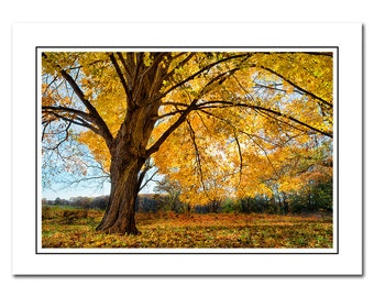 Autumn Tree Note Card with Envelope, Scenic Fall Foliage, Blank inside, Greeting Card, Yellow, Thank You Card