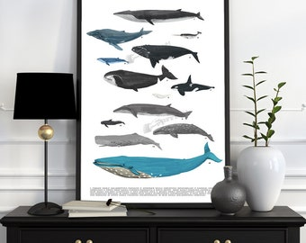 Whales chart A3 size poster, animal art, Wall art ,Nursery art , Giclee poster, Ocean Animal art, Sea life poster print SEA219WA3