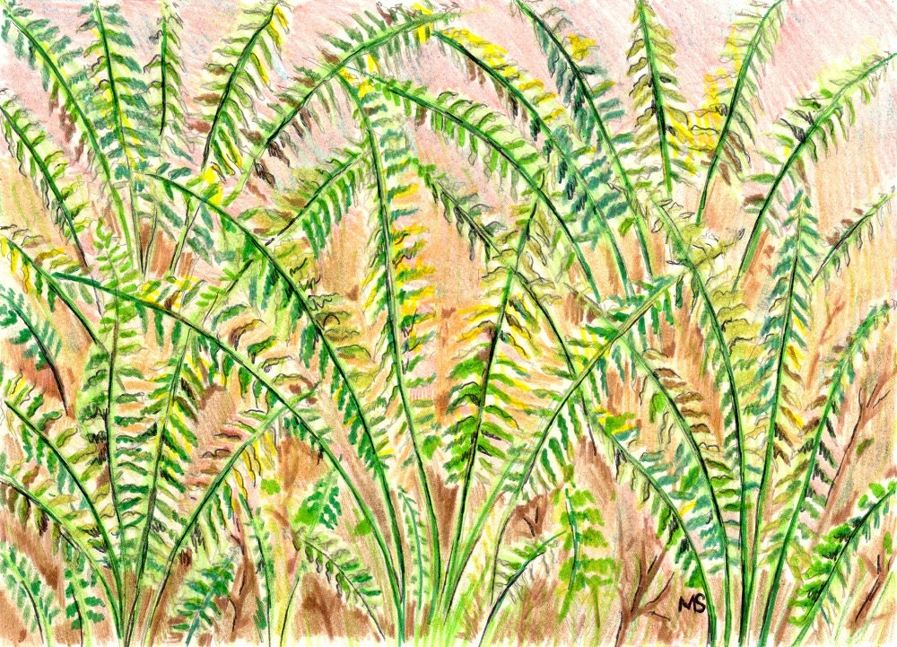 Fern Art Original Drawing Woodland Wall Art Fern Wall