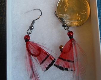 Red Golden Pheasant Earrings.