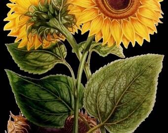 Temporary tattoo - Sunflower