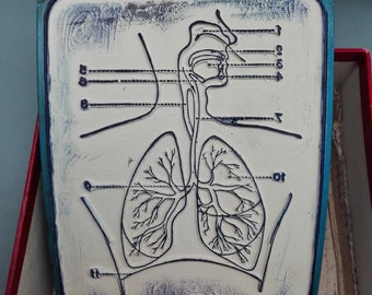 "Anatomical Educational Stamp of the ""Respiratory System"" with box"
