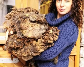 Raw fleece Ryeland, raw wool fleece, rare breed fleece, raw fibre for spinning, unwashed wool for spinning, sheep wool Ryeland fibre weaving