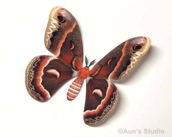 Realistic Paper Moth Cutouts - Cecropia Moth - 5 pieces