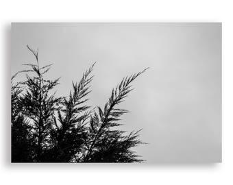Minimal Tree Print Black and White
