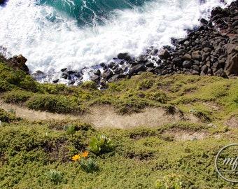 Daisy by the shore, New Zealand Digital Print