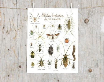Print Minibeasts of our house | Watercolor Insects painting | Natural History Art mural | Poster identification classification Bugs Insect