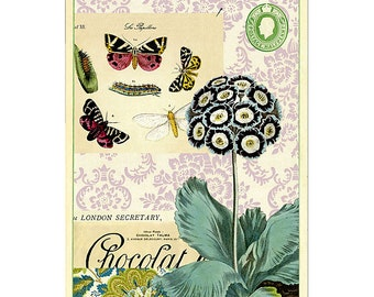 Butterfly Flora & Fauna Greeting Card by Cavallini to Mail or for Framing, Collage, Scrapbooking and Paper Arts PSS 2832
