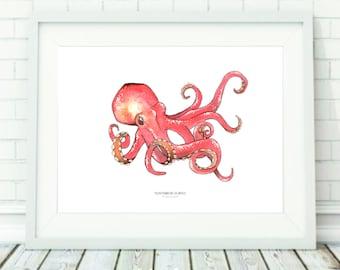 Tobias Octopus