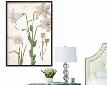 Farmhouse Decor - Rustic Decor - Extra Large Print - Wall Art Print - Prints - Botanical Print - Wall Art - Home Decor - Vintage Wall Art