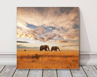 Elephants walking at sunset.  Canvas Print . Safari picture