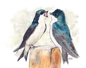 Male Tree Swallows 5x7  Pen and Ink and Watercolor, animal,birds,bird lover, swallows, wildlife,nature,males,tree swallows,birdwatcher