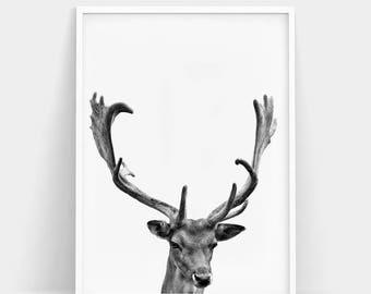 Deer Print, Deer Antlers,Christmas Deer, Hunting Gift, Deer Head, Deer Poster, Antler Wall Art, Deer Wall Art, Animal Print, Deer Printable