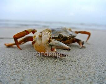Crab digital download