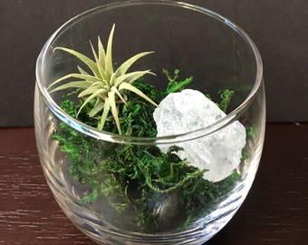 Air Plant Crystal Glass Terrarium - tillandsia holder - terrarium - crystal gift - holiday gift - boho - airplant - plant gift