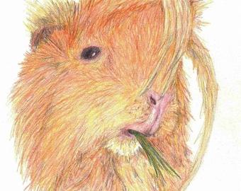 """Custom Pet Portrait 10"""" x 10"""" Colour Pencil"""