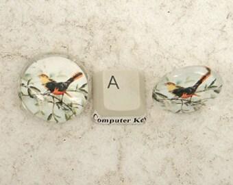 BULK PACK 10 Ready Made Cabochon, 25mm Glass, Birds