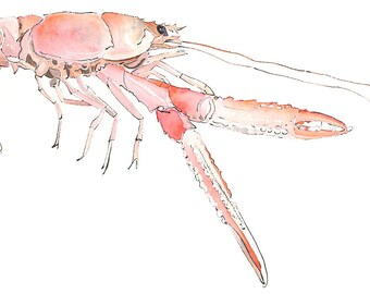Langoustine. Birthday Gift for Foodie. Culinary Art. Food Illustration. Pink Kitchen Art. Crustacean. Blotted Line Drawing. Home Decor.