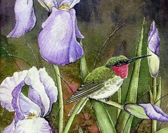 PRINT - IRISES - HUMMINGBIRD; male ruby throat, bird, garden, flowers, irises, nature, feathers, wings, approximately 8x 10 inches