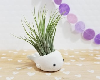 Whale Air Plant, Whale Planter, White Whale Gift, Desk Accessory, Modern Planter, Air Plant Gift, Gift for Him, Thank you Gift, Ocean Decor