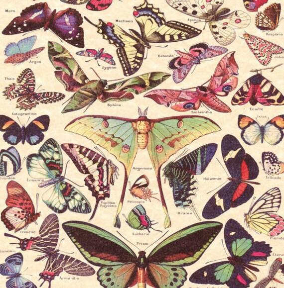 Butterfly fabric Shower Curtain Luna Moth Butterflies