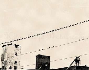 Industrial Photography Print - Black and White Graphic Style Home Decor Photo - Birds on Wires - Nature and Industrial Art - B&W Art Print