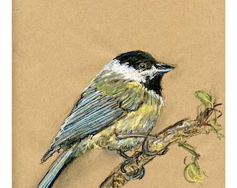 5x7 print Chickadee - Bird art mixed media drawing