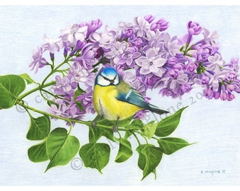 Blue Tit Bird on Lilac Blossom Branch Original Art Print