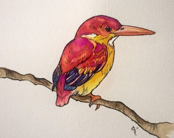 Rufous Backed Kingfisher, watercolor, 9x12