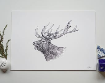 Scottish Highland Stag Fine Art Giclee Print A4