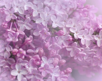 Nature photography, Lilac photography instant download, wall art, home decore, nature photo, downloadable floral print, lilac flower, spring