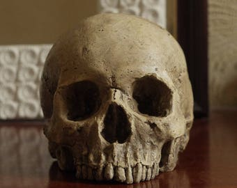 HUMAN SKULL REPLICA (polished bone) full size realistic made from plaster of Paris and painted for an aged, weathered effect