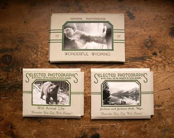 Vintage Souvenir Travel Snapshot Collections from Wyoming - Three Available