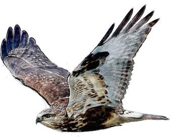 Hawk Image, Hawk Cutout, Bird Cutout, Large Hawk, Large Hawk Image, Large Hawk Cutout, Hawk Template, Watercolor Hawk Image, Kids Room Decor