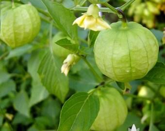 Tomatillo Verde Heirloom Seeds - Non-GMO, Open Pollinated, Untreated