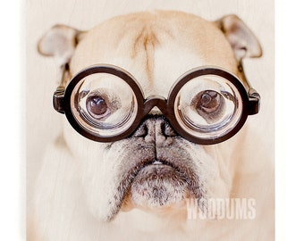Nerdy English Bulldog Wood Print - Bulldog Lover, Nerdy Dog, English Bulldog Art, Wooden Wall Decor, Wood Art Print, Dog Owner Gift