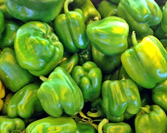 Cal Wonder Heirloom Sweet Pepper Seeds Non-GMO Naturally Grown Open Pollinated Gardening