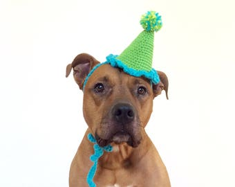 Party Hat, Dog Party Hat, Party Hat for Dogs, Gotcha Day Hat, Dog Hat, Green Blue Party Hat, Dog Collar, Pet Party, Dog Accessories