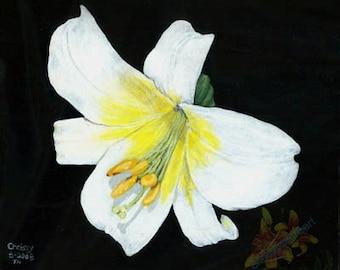 White Regal Lily PRINT