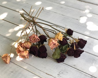 Real Dried Miniature roses, Dried roses , small roses