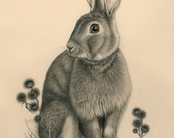 Bigwig the Wild Rabbit Giclee PRINT 8x11 (Super high-quality)