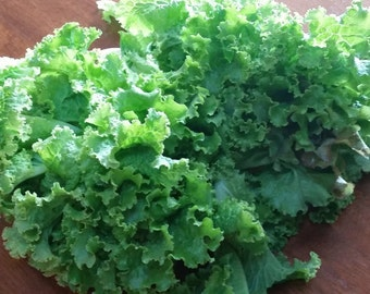 Green Ice Leaf Lettuce (600 thru 40,000 seeds) heirloom salad cool season #296