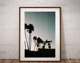 Palm Tree Silhouette Print