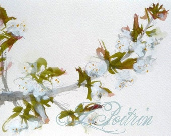 Original watercolour Cherry blossoms flowers WATERCOLOR painting - wall art