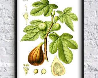 Fig tree print kitchen decor wall art print vegetable print botany botanical print green leaves poster fetus print