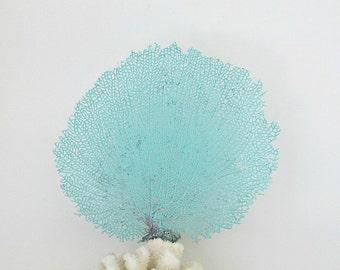 Natural Sea Fan Coral Aqua Turquoise Pastel Beach Decor For Framing Bahama Seafan