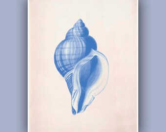 Seashell  Print,  Vintage Common Whelk  sea shell print,  Marine Natural History Wall Decor, Nautical art,  Blue Print, Coastal Living